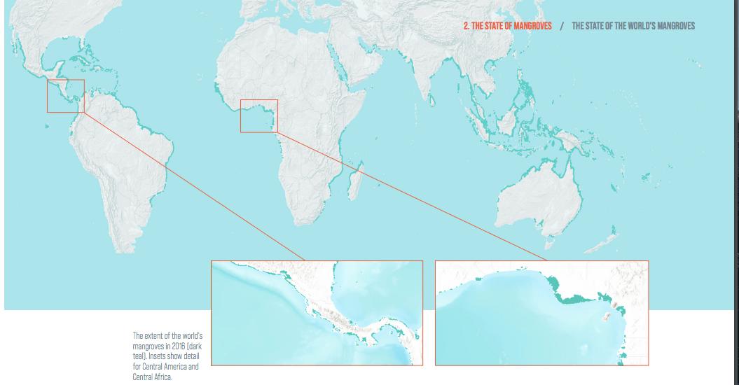 manglares-méxico.mundo