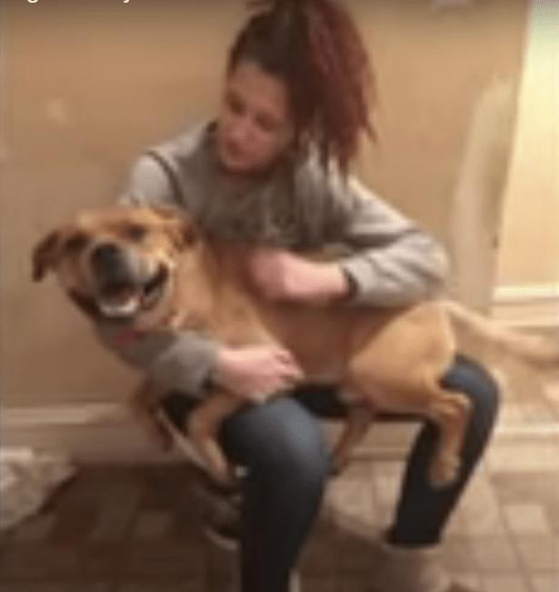 Esta mujer buscaba una nueva mascota en un refugio y encontró al perro que perdió dos años antes