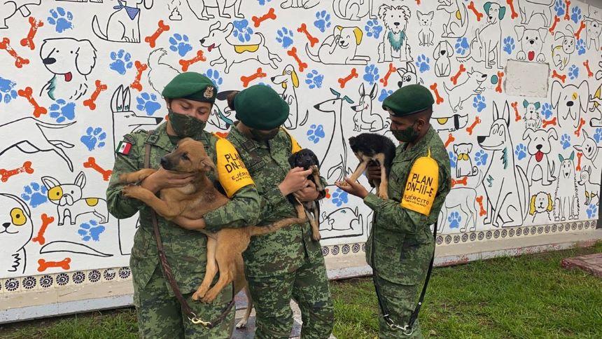 ¡Guau! 'Los Perritos de Santa Lucía', el refugio que Sedena creó en la zona AIFA