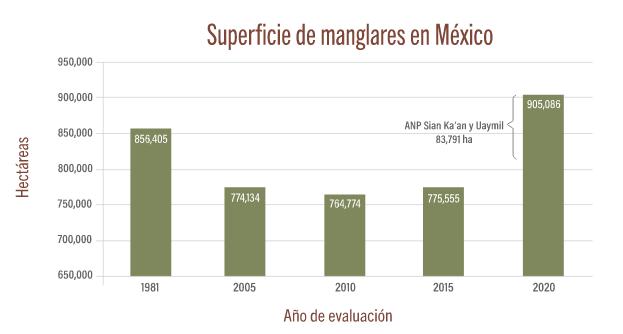 superficie-manglares-mexico