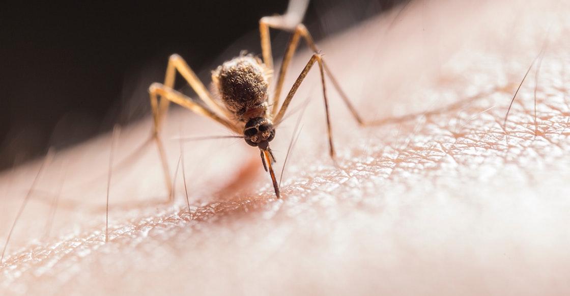 biontech-malaria-vaccine-Pfizer-covid-malaria-mRNA-messenger-rna
