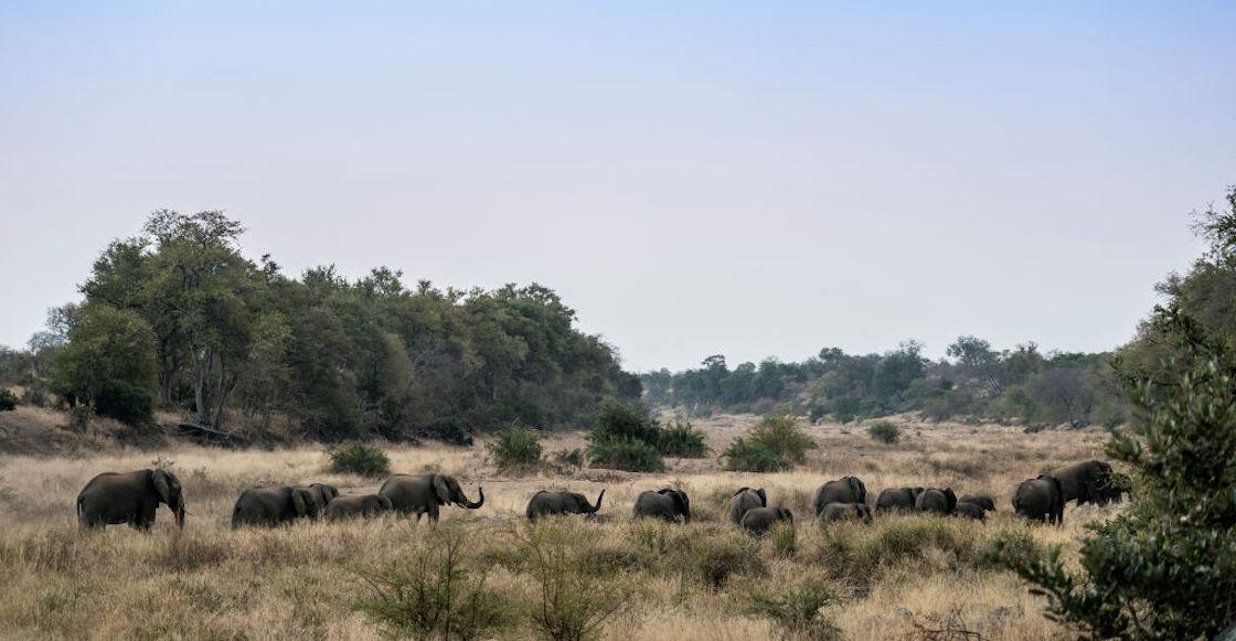 manada-elefantes-regresa-casa-viaje