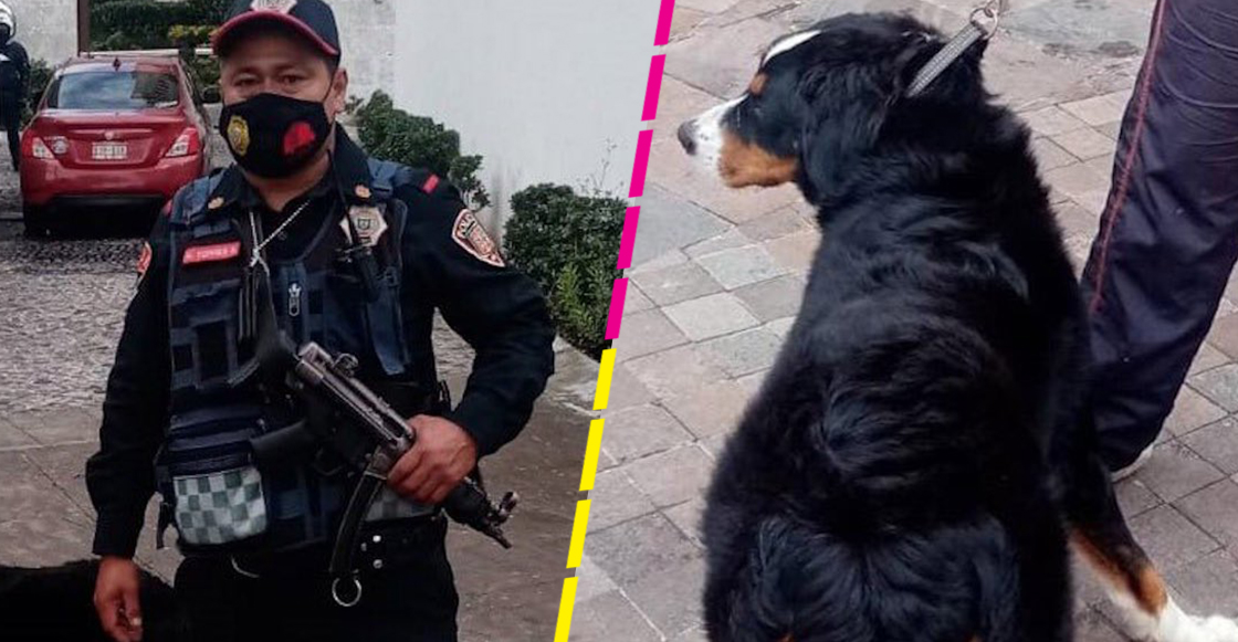 policia-evita-atropellen-perrito-cuajimalpa