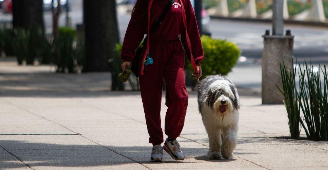 registro-mascotas-cdmx-perrito-gatito