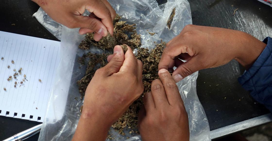 marihuana-scjn-mexico