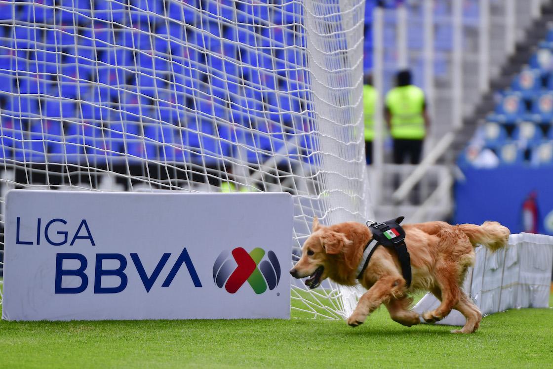 ¡Ideas perronas! El Corregidora de Querétaro tendrá zonas exclusivas para perritos en las tribunas