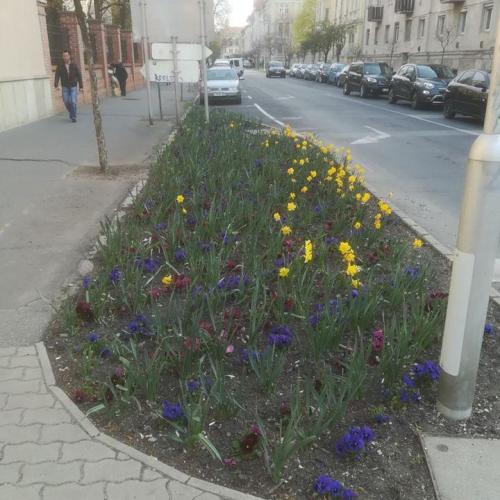 Hiába ültet virágokat a Sopron Holding, úgy tűnik lopják őket!