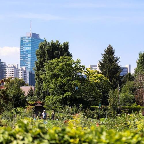 Rendkívüli költségvetést fogadott el Bécs, hogy fákat ültessen!