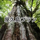 屋久島セット(レディース)