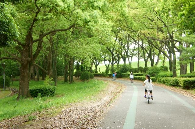Cycling around Kawaguchiko – bicycle rental at Kawaguchiko