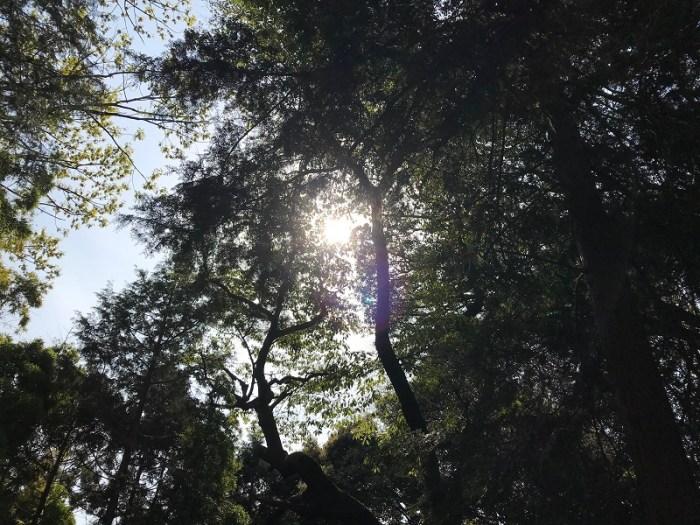 伏見神宝神社の森の画像