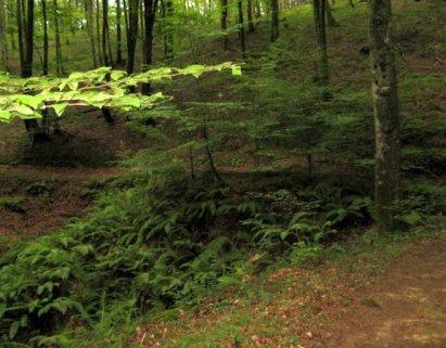 Bosque del señorío de Bertiz
