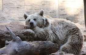 bear-88960__180