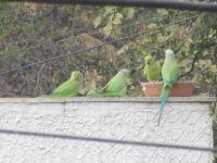 Chatty neighbors.