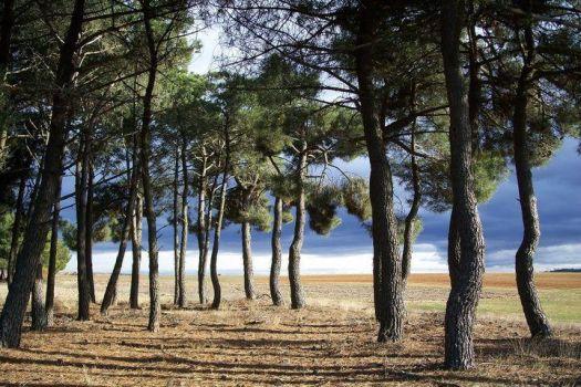 Las maravillas entre Pinares y la Ribera del Duero