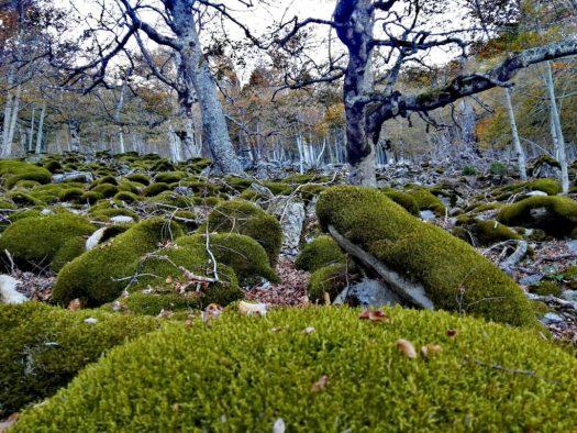 El Royo. Bosques en Soria