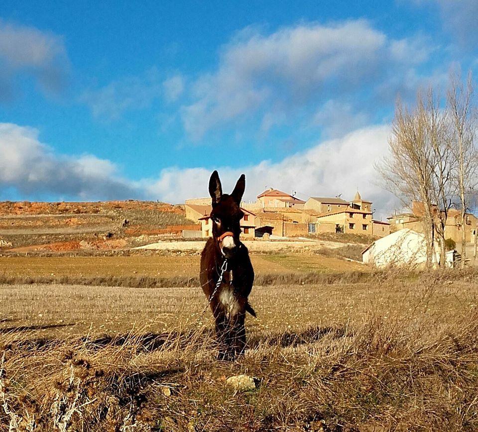 Reyes, la mascota de Arenillas