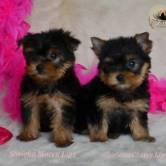 Cachorros-Soriena Cachorros