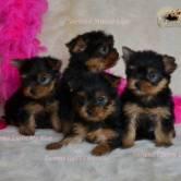 DSC_13150 Cachorros