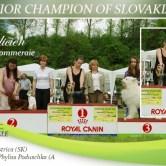 Galicien-GRANDCHAMPION-OF-SLOVAKIA Exposiciones
