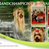 Galicien-NEW-GRANDCHAMPION-OF-SLOVAKIA Exposiciones