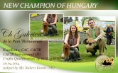 NEW-CHAMPION-OF-HUNGARY Exposiciones