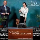 CH.-Cocker-Liberi-Gaias15 Exposiciones