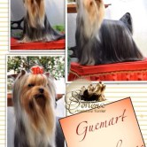 Guemart-Cuauthemoc-Tino1 Imágenes