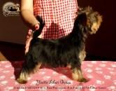 Yvette-Liberi-Gaias Cachorros