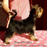 Yvette-Liberi-Gaias3 Cachorros