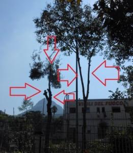 alberi-caserma-pompieri