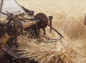 raccolta-del-grano