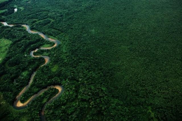 Resultado de imagem para Nove dos 17 estados da Mata Atlântica estão no nível do desmatamento zero, aponta estudo