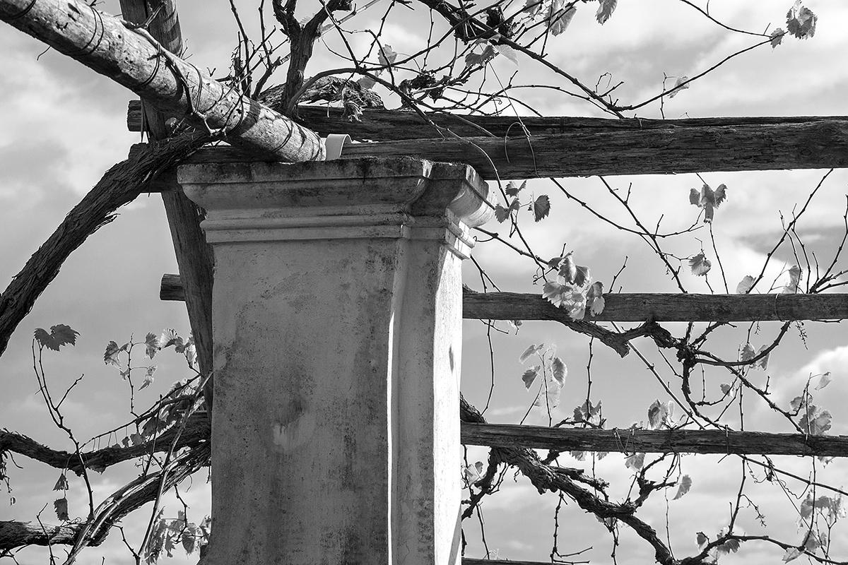 Dettaglio della scalea pergolata del Giardino della Minerva a Salerno. Foto di Sossio Mormile