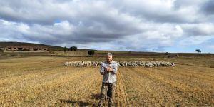Ganadero en el campo con su rebaño de ovejas