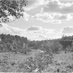 Mainilan laukaukset ammuttiin vuonna 1939 Mainilan kylään.