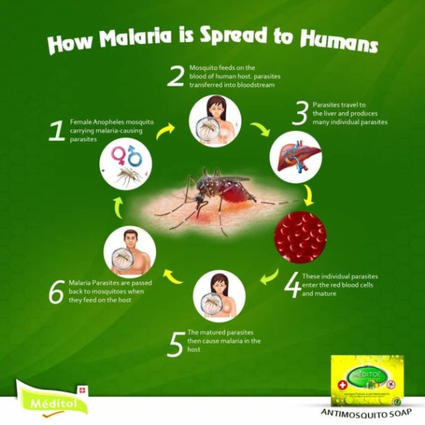 how malaria spreads to humans