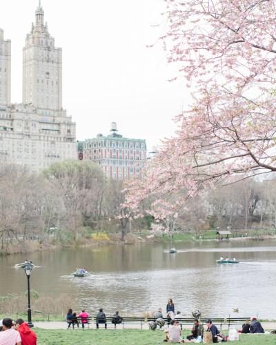 Springtime Wedding in Central Park