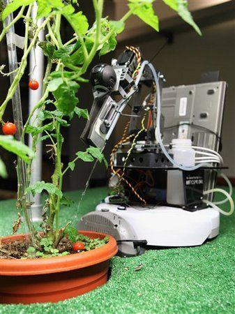 I Robot And Gardener MIT Droids Tend Tomato Plants