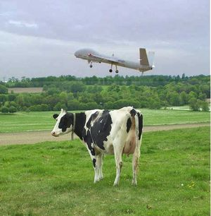 cow drone