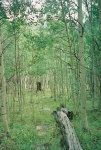 Northern forest no longer trap carbon