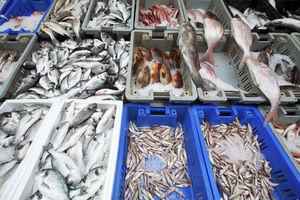 fish @ market