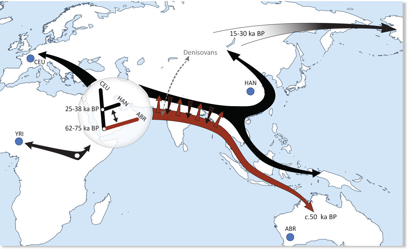 Aboriginal Australians Descended From Early Migration Of