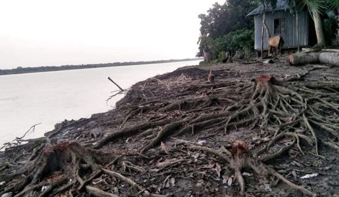 নড়াইলের ডিক্রীরচর ভয়ংকর নদী ভাঙ্গনের কবলে এলাকাবাসী