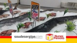 nunes-peixoto (8)