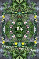 Collage of kaleidoscopic plants.
