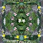 Collage of kaleidoscopic plants.