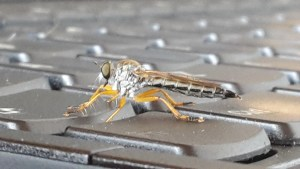 close up of fly on keyboard