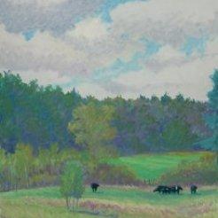 Rick M cows