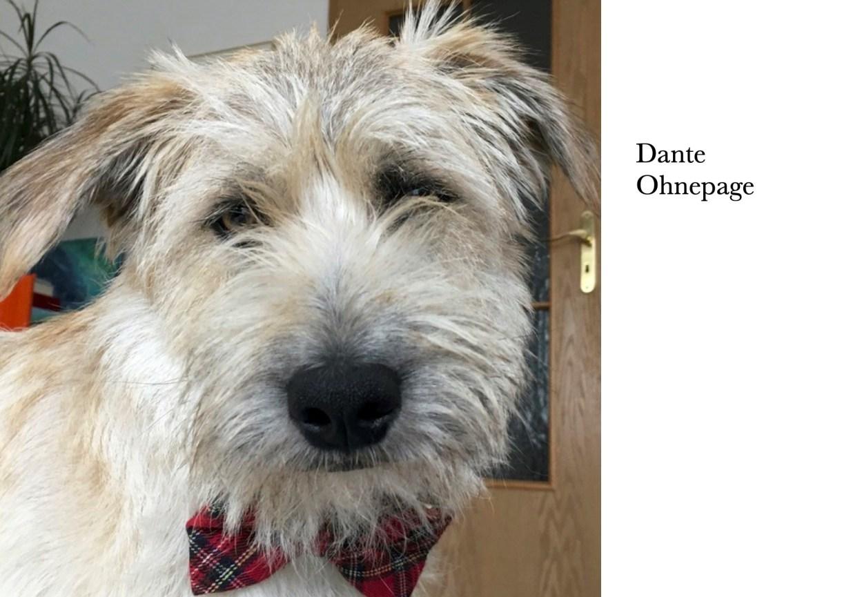 Vereinshund Dante